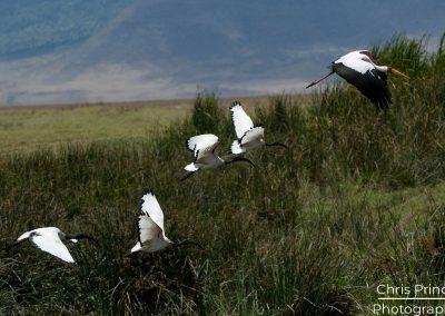 Flying Waders